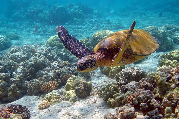 جریمه میلیونی وارد کردن خسارت به لاک پشت و آبسنگ مرجانی