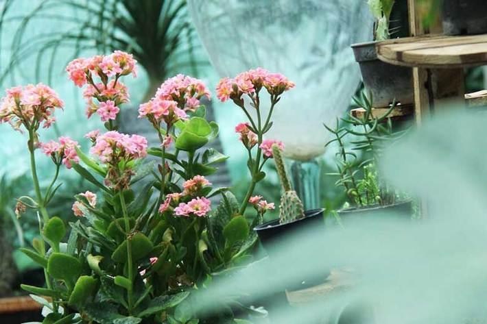 قوانین ساده برای زنده نگهداشتن گیاهان در خانه