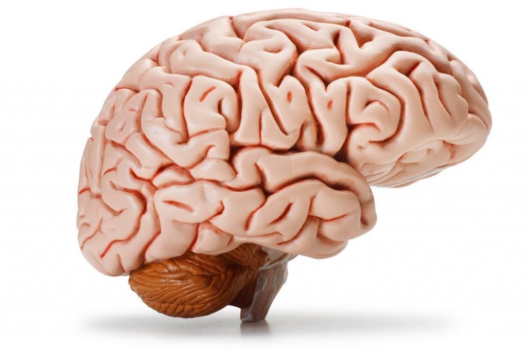 مغز انسان چگونه صحبت کردن را کنترل می نماید؟