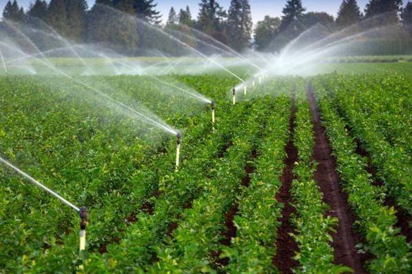 یاری به گسترش کشاورزی ، دانش بنیان ها زیرساخت های علمی پایش آب و خاک را توسعه دادند خبرنگاران