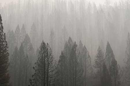 آتش سوزی های آمریکا تعداد مرگ کرونایی ها را افزایش داده است